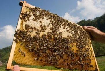 Τα ζητήματα της μελισσοκομίας επί τάπητος