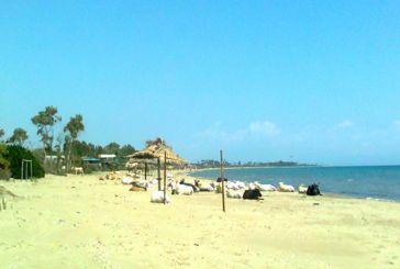 """Hλιοθεραπεία"" αγελάδων στην παραλία του Λούρου!"