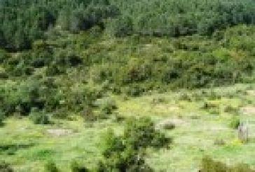Οικολογική Κίνηση Πάτρας:Με εκχέρσωση απειλείται δασική περιοχή στη Βελβίνα Ναυπακτίας