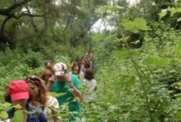Κοινο_Τοπία:Αδύνατη η προσπέλαση στο δάσος Φράξου
