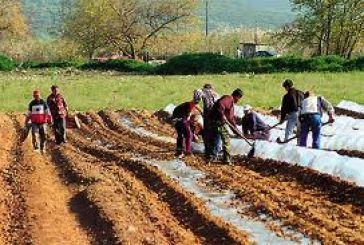 Προτάσεις για τις αγροτικές περιοχές ζητά από τους δήμους ο Κατσιφάρας