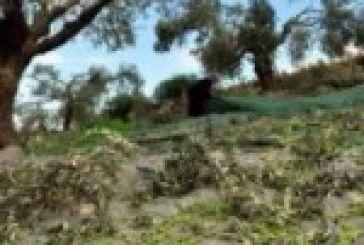 Γη σε νέους αγρότες με ενοίκιο 5 ευρώ το στρέμμα.Στην Αιτ/νία τα πρώτα στρέμματα