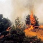Πυρκαγιά στην Πεντάλοφο