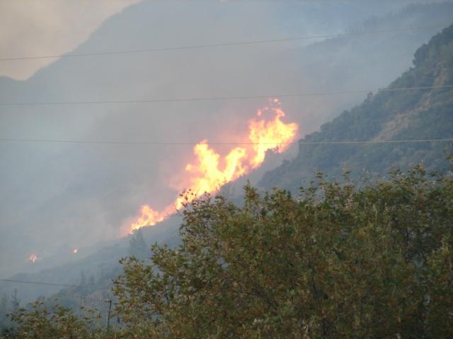 Έγκαιρη επέμβαση της Πυροσβεστικής σε πυρκαγιά στη Σκουτεσιάδα