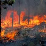 Υπό έλεγχο πλέον η πυρκαγιά στη Σκουτεσιάδα