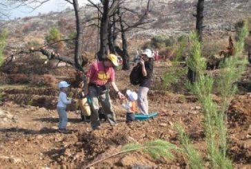 Φωτιές: Τώρα αρχίζουν τα δύσκολα