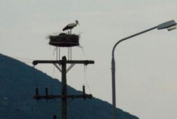 Απεγκλώβισαν πελαργό από τα καλώδια της ΔΕΗ στο Ρίβιο. Μίνι βραχυκύκλωμα