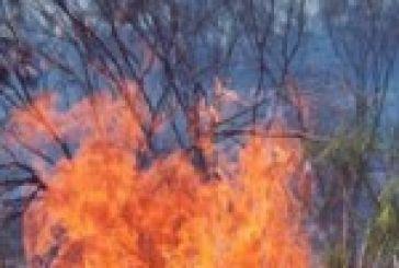 Πρόλαβαν τη φωτιά στη Γραμματικού