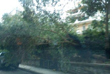 Παντού πεσμένα δένδρα μέσα στο Αγρίνιο.Ένα έπεσε σε περίπτερο.