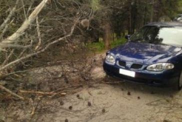 Μετρώντας ζημιές και …πεσμένα δένδρα. Ευτυχώς χωρίς τραυματίες…