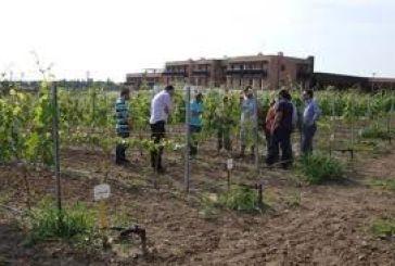Ξεκινά η κατάθεση προτάσεων για τη στήριξη αγροτικών-κτηνοτροφικών επιχειρήσεων