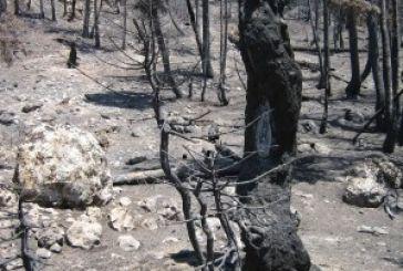 Μια άλλη εκδοχή γιατί μπαίνουν οι πυρκαγιές