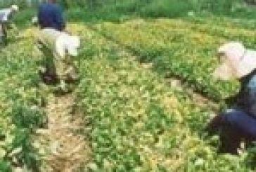 Αγροτική ανάπτυξη: Παρατείνεται η υποβολή προτάσεων