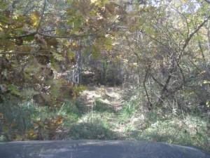 Καταστρέφουν το δάσος του παλαιού Αγίου Χριστοφόρου
