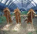 Η εκτροφή σαλιγκαριών ως επένδυση