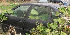 Αυτοκίνητο –κήπος στον Αστακό