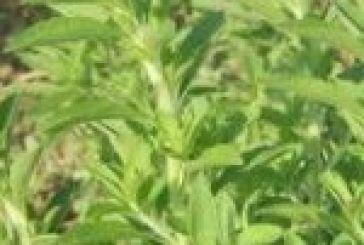 Διέξοδο στη στέβια για τους Αιτωλοακαρνάνες αγρότες «βλέπει» η ΕΑΣ Αγρινίου