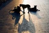 Νέα επίθεση σκυλιών στο κέντρο του Αγρινίου