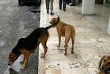 Στειρώνει τα αδέσποτα ο δήμος Ιεράς Πόλεως Μεσολογγίου