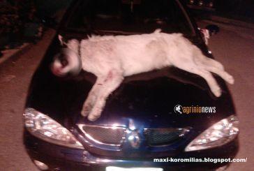 Περιέφερε το σκύλο του που σκότωσαν στο χωριό για διαμαρτυρία