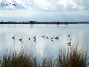 Υγρότοποι, μια πολύτιμη περιβαλλοντική κληρονομιά