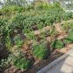 """Στα υπόψιν και """"δημοτικός λαχανόκηπος"""" στο Αγρίνιο"""