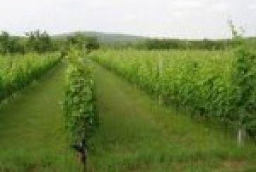 Ξεκινήσαν οι αιτήσεις για τη βιολογική γεωργία