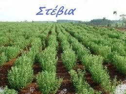 Hμερίδα στο Αγρίνιο για την καλλιέργεια της Στέβιας