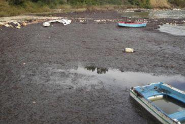 Γέμισε από φύκια και σκουπίδια το λιμάνι στη Πογωνιά