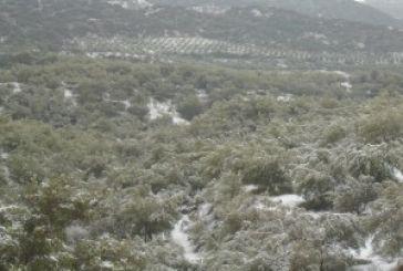 Xιονισμένη και όμορφη η περιοχή του Ελαιόφυτου