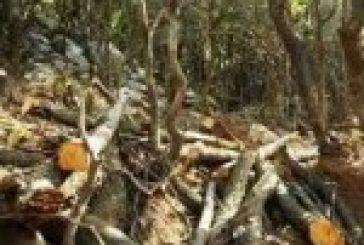 Συμπλοκή λαθροϋλοτόμου με δασικούς υπαλλήλους στη Λεπενού