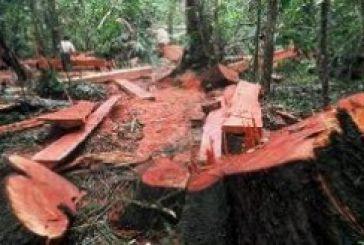 Γιατί δεν έχει ξύλα η αγορά…