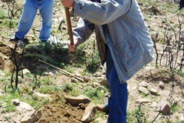 Φύτεψαν περισσότερα από 3000 δέντρα (φωτό)