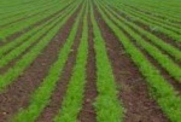 Μέχρι τις 12 Μαϊου οι αιτήσεις για βιολογική γεωργία