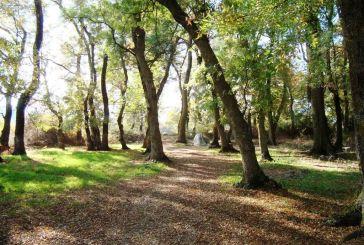 Μνημεία της Φύσης: Τα δάση φράξου στο Τριχώνιο και Λεσίνι