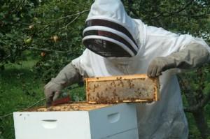 μελισοκ