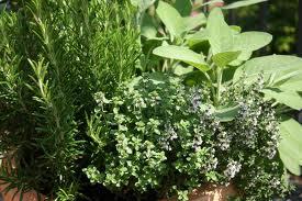 Ημερίδα για τα αρωματικά-φαρμακευτικά φυτά