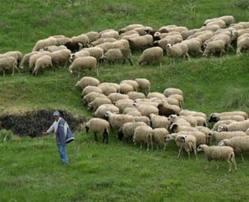 Αλβανός ζωοκλέφτης στον Αστακό
