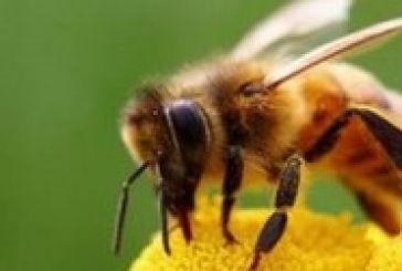 Μοιραίο τσίμπημα μέλισσας για Αγρινιώτισσα