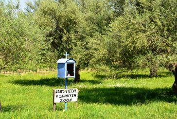 """Πινακίδα σε λιοστάσι προειδοποιεί: """"Απαγορεύεται η στάθμευση ζώων"""""""