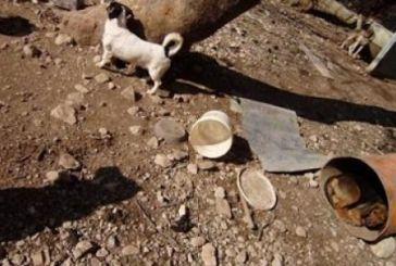 Κολαστήριο σκυλιών στη Ναύπακτο (video)
