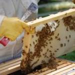 Σεμινάριο Μελισσοκομίας