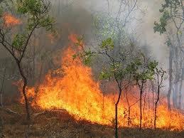 Μάχη με τις φλόγες στο Ματσούκι