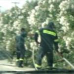 Φωτιά μικρής έκτασης στην Εθνική Οδό έξω από το Μεσολόγγι (Video)