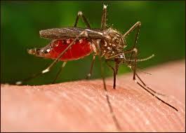 Κρούσμα ελονοσίας στην Αιτωλοακαρνανία