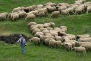 Βιολογική κτηνοτροφία: ξεκίνησαν οι πληρωμές για την Αιτωλοακαρνανία