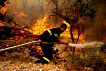 Φωτιά έκαψε 20 στρέμματα στην περιοχή του Αστακού
