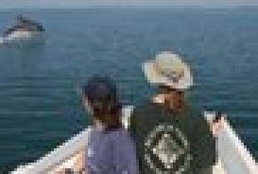 Καμπανάκι για τα δελφίνια σε Ιόνιο και Αμβρακικό