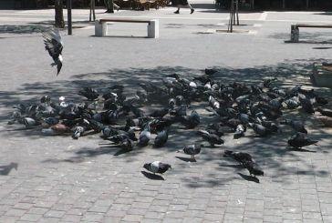 Εικόνες από την πλατεία…