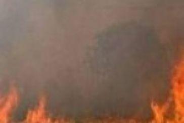Σβήστηκε άμεσα φωτιά σε ξερά χόρτα στη Μ.Χώρα